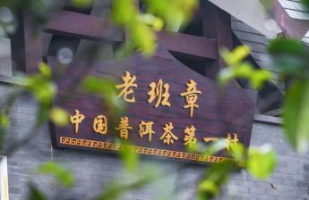 百山问茶丨茶中zhiwang,班章传奇